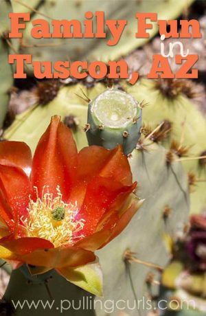 Family Activties are easy to find in Tuscon, if you know where to look!