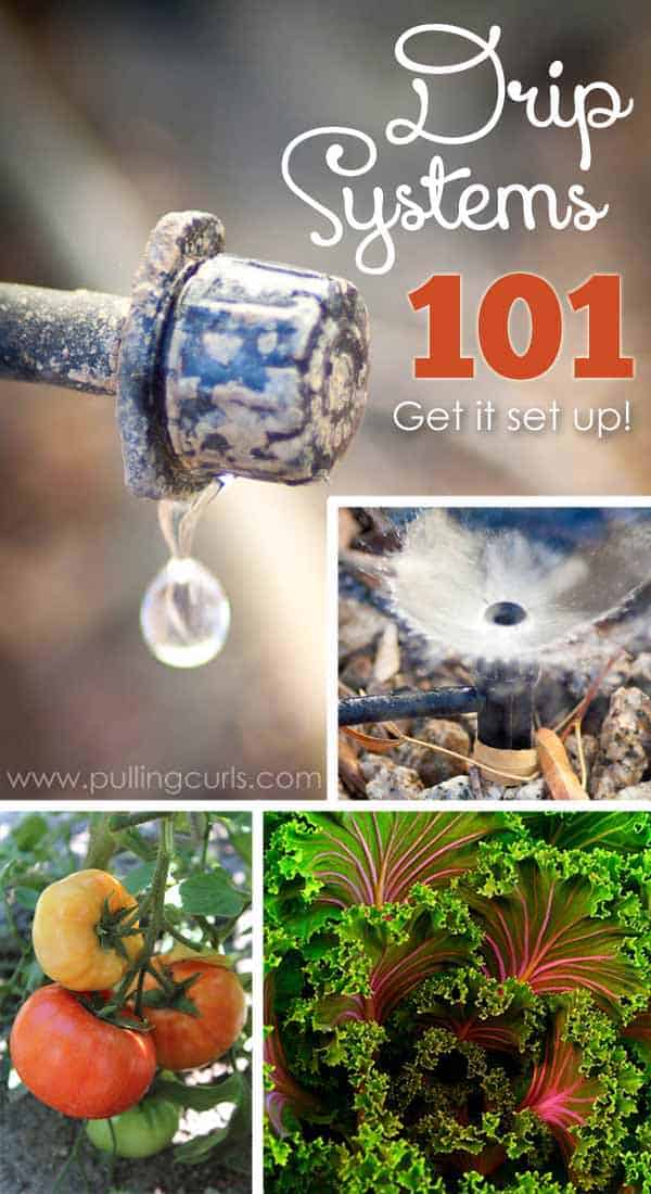 Drip irrigation is an easy, effective way to water your plants without wasting our most precious resource, water.  Find out what you need and how to attach it all in this post that shows you why you should use drip irrigation. via @pullingcurls