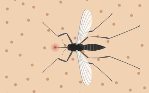 Let's all take a nice deep breath and talk about the Zika Virus in pregnancy. What we know, what we don't know, and what we can do.