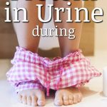 Protein In Urine While Pregnant